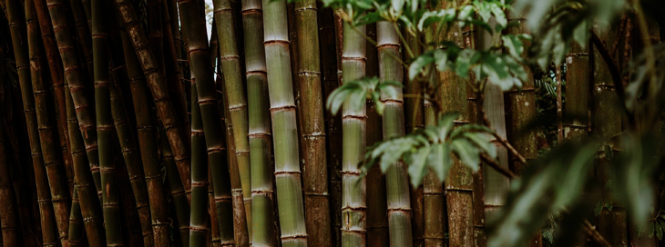 bamboo plants for t-shirts