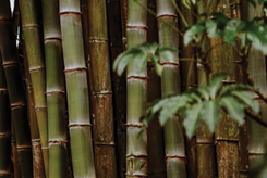 bamboo vs organic cotton
